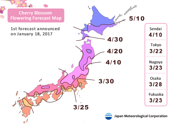 Cherry Blossom Flowering Forecast Map