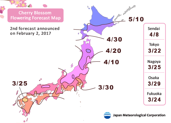 cherry blossoms japan 2017 forecast