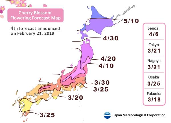 floraison sakura japon 2019