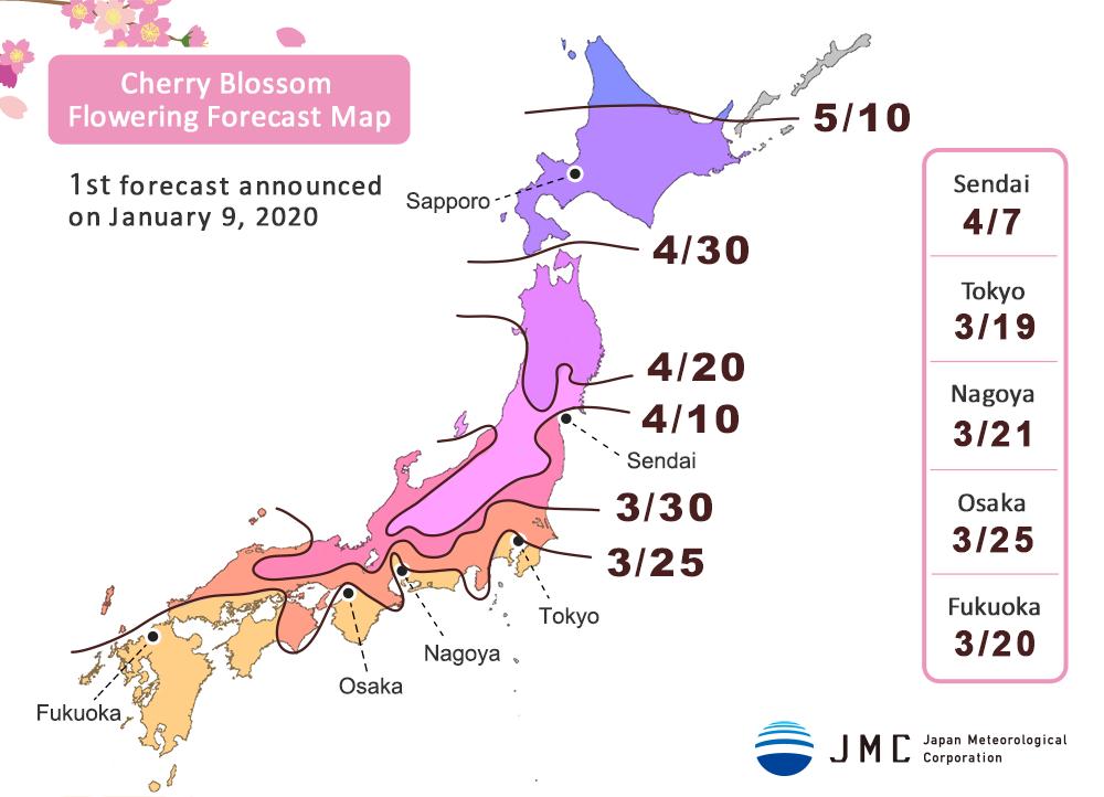 floraison sakura japon 2020